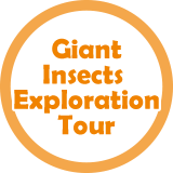 Giant Insects Exploration Tour